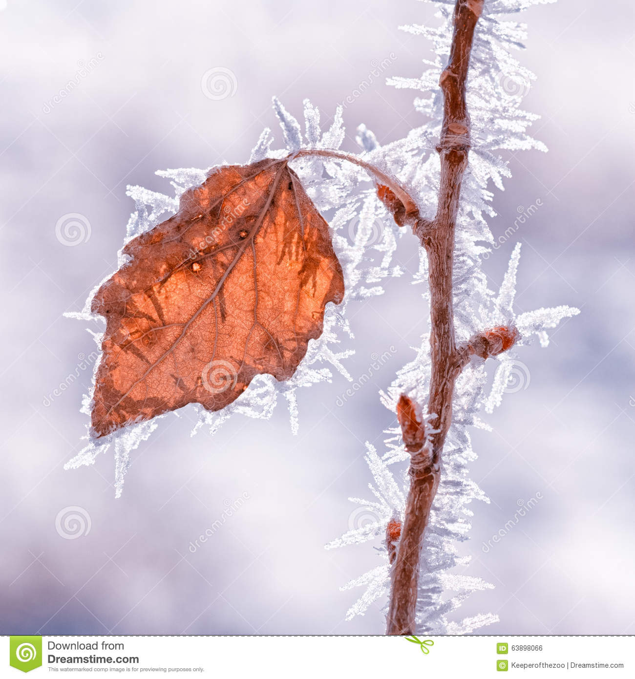 Leaf Covered in Hoarfrost