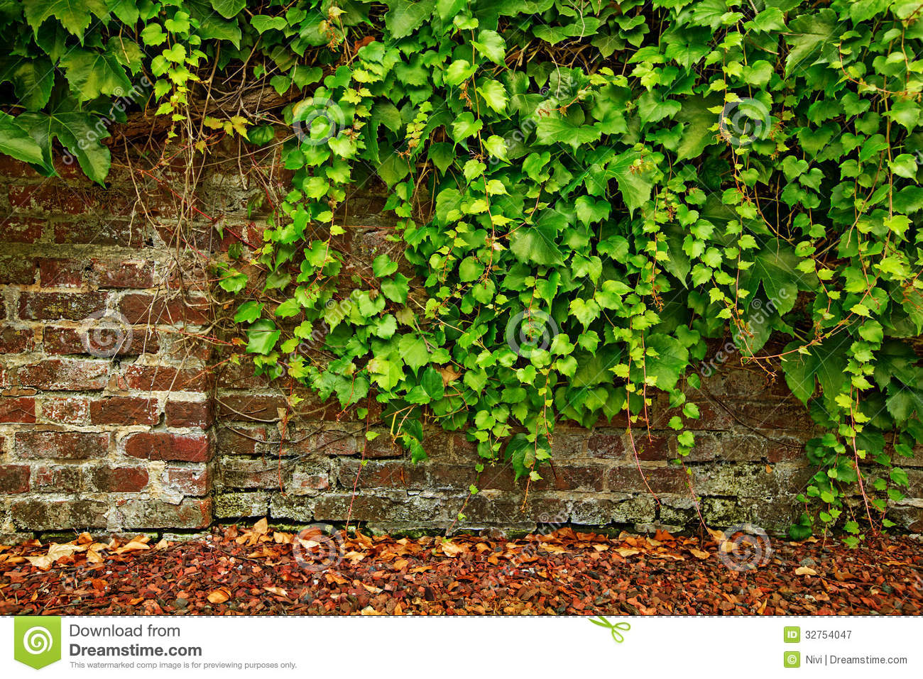 Leaf Covered Old Brick Wall Royalty Free Stock Photography