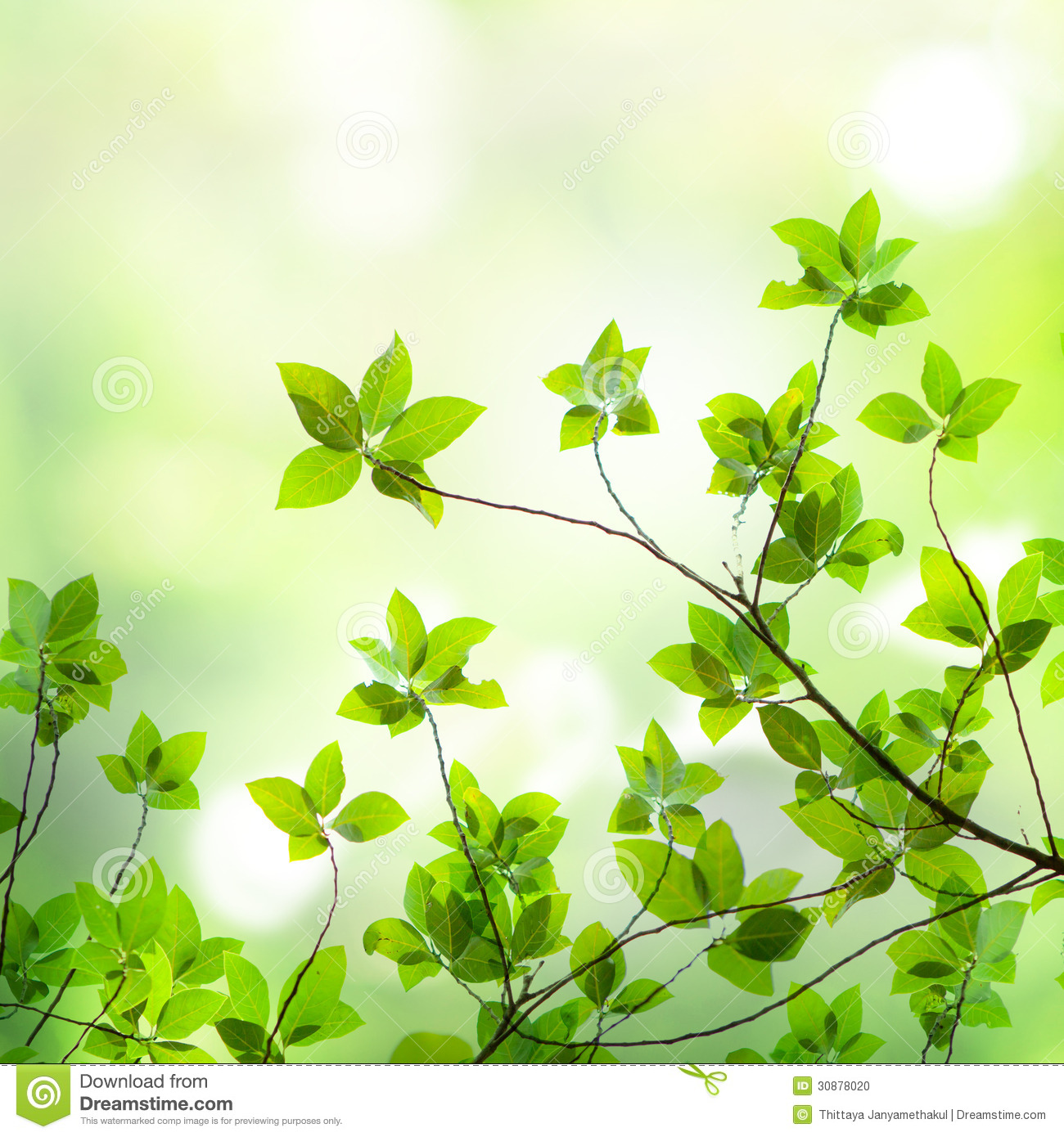 Wallpaper green background - Light through leaf | Color Collection ...