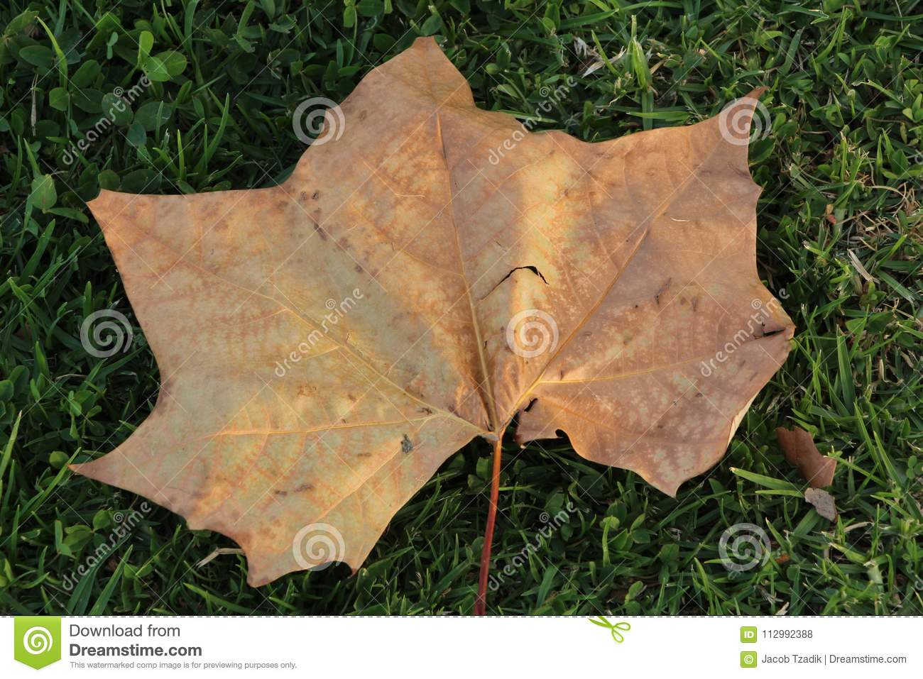 Leaf on the green grass