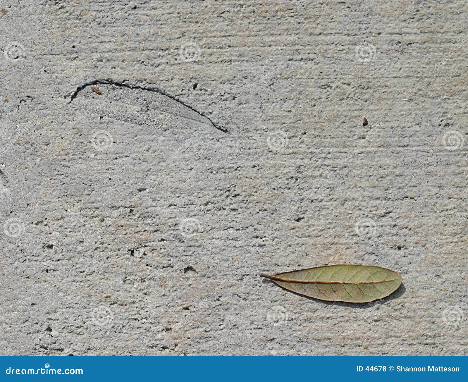 Leaf and Imprint
