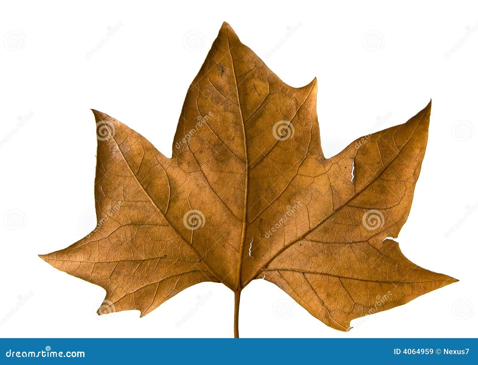 Leaf Isolated