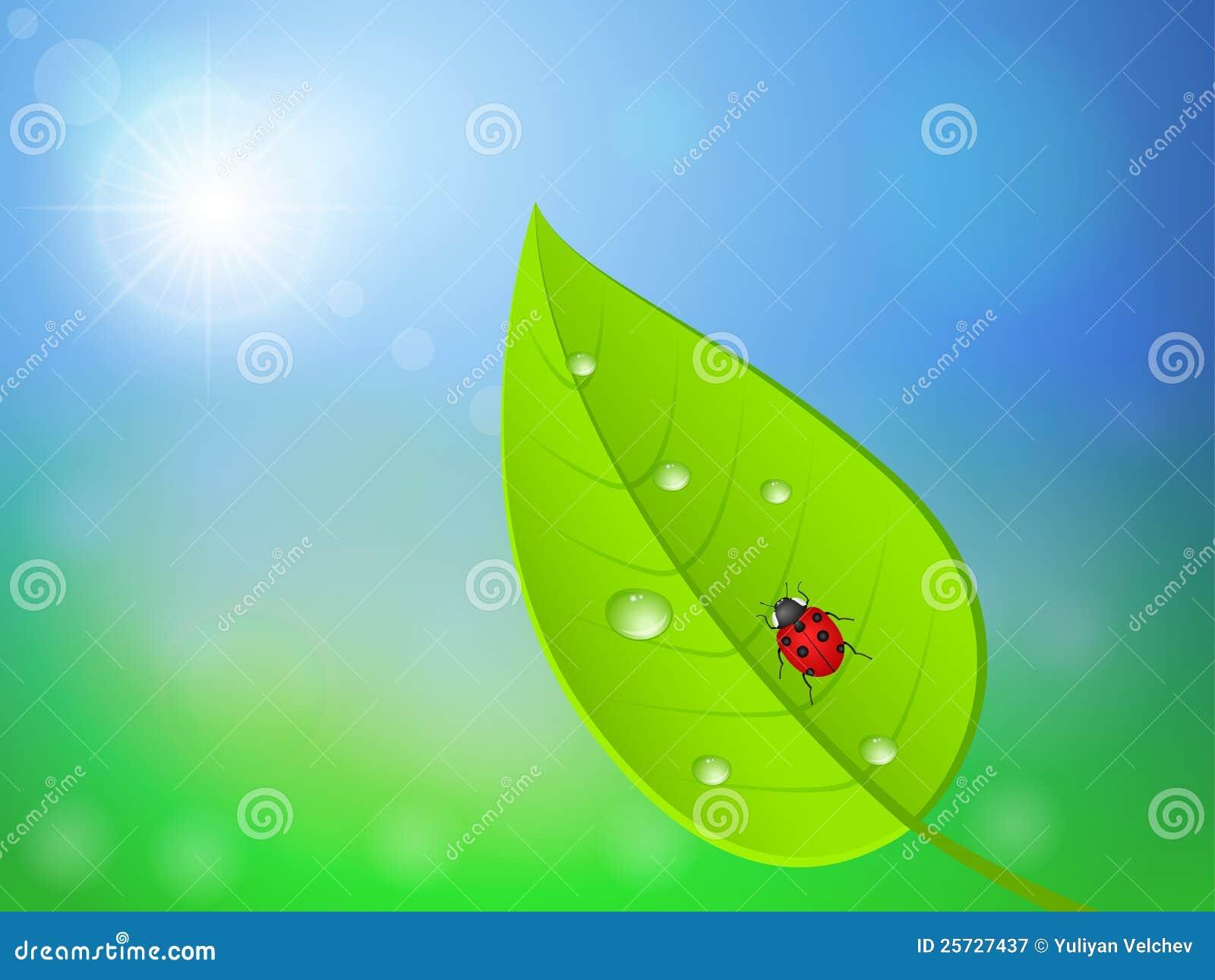 Leaf and ladybird