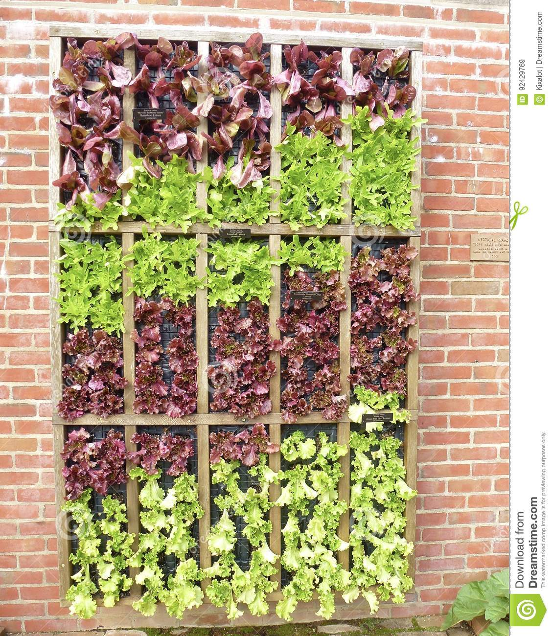 Leaf Lettuce Wall Stock Image Image Of Green Diet Wall 92429769