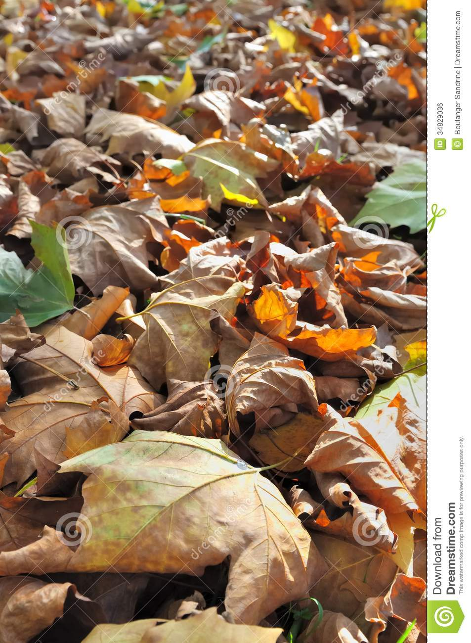 Leaf Litter Royalty Free Stock Image Image 34829036