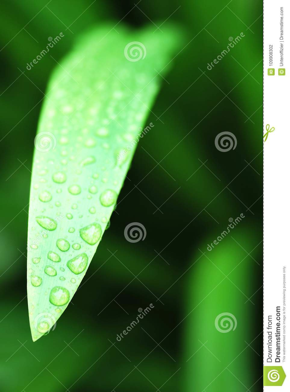 A leaf of a plant with droplets of water after the rain