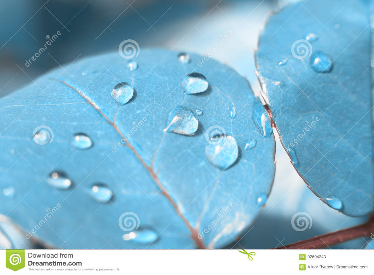 leaf of roses blue wallpaper texture abstraction concept stock