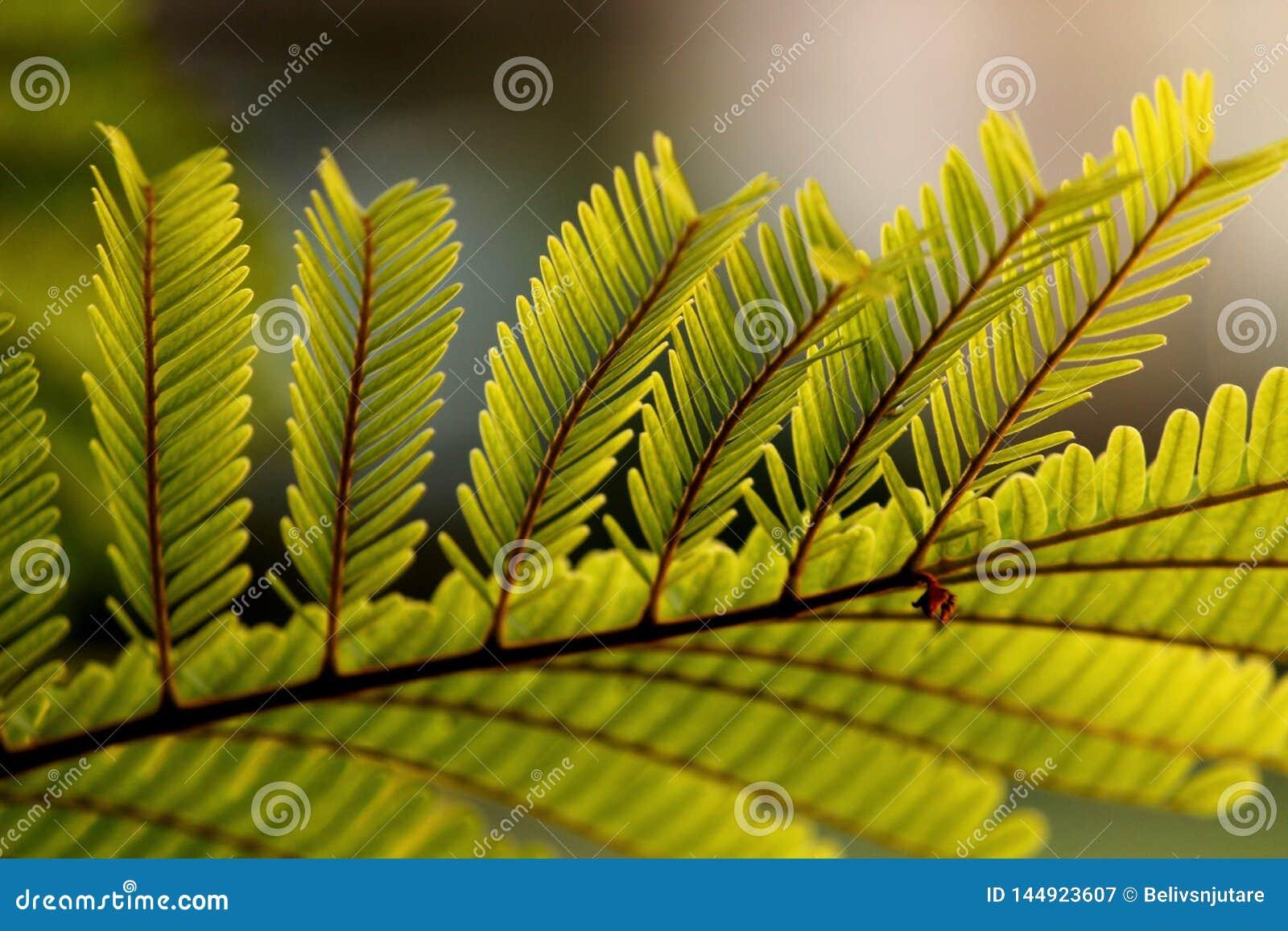 Leaf& x27; s-Leben