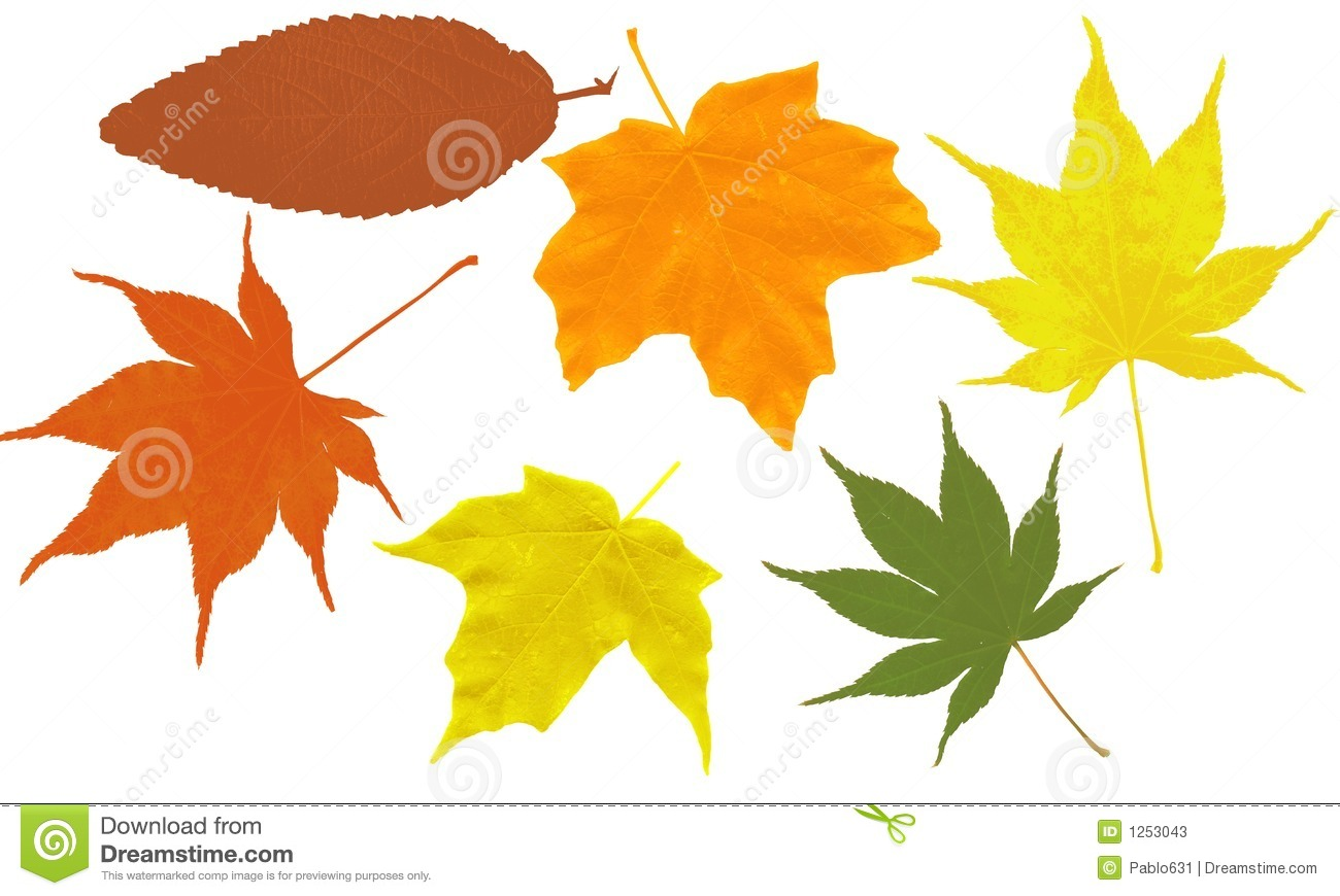 Leaf outlined shapes on a white background. Create your own leaf ...
