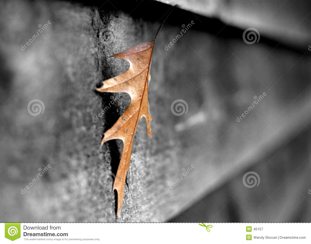 Leaf on shed