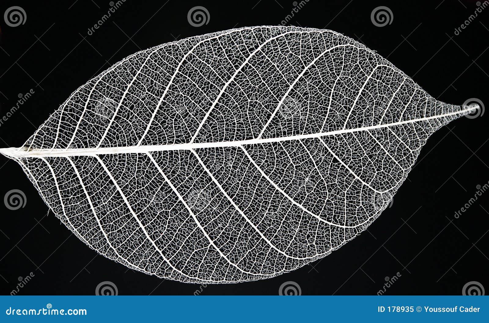 Download Leaf Skeleton stock image. Image of full, concept, element - 178935