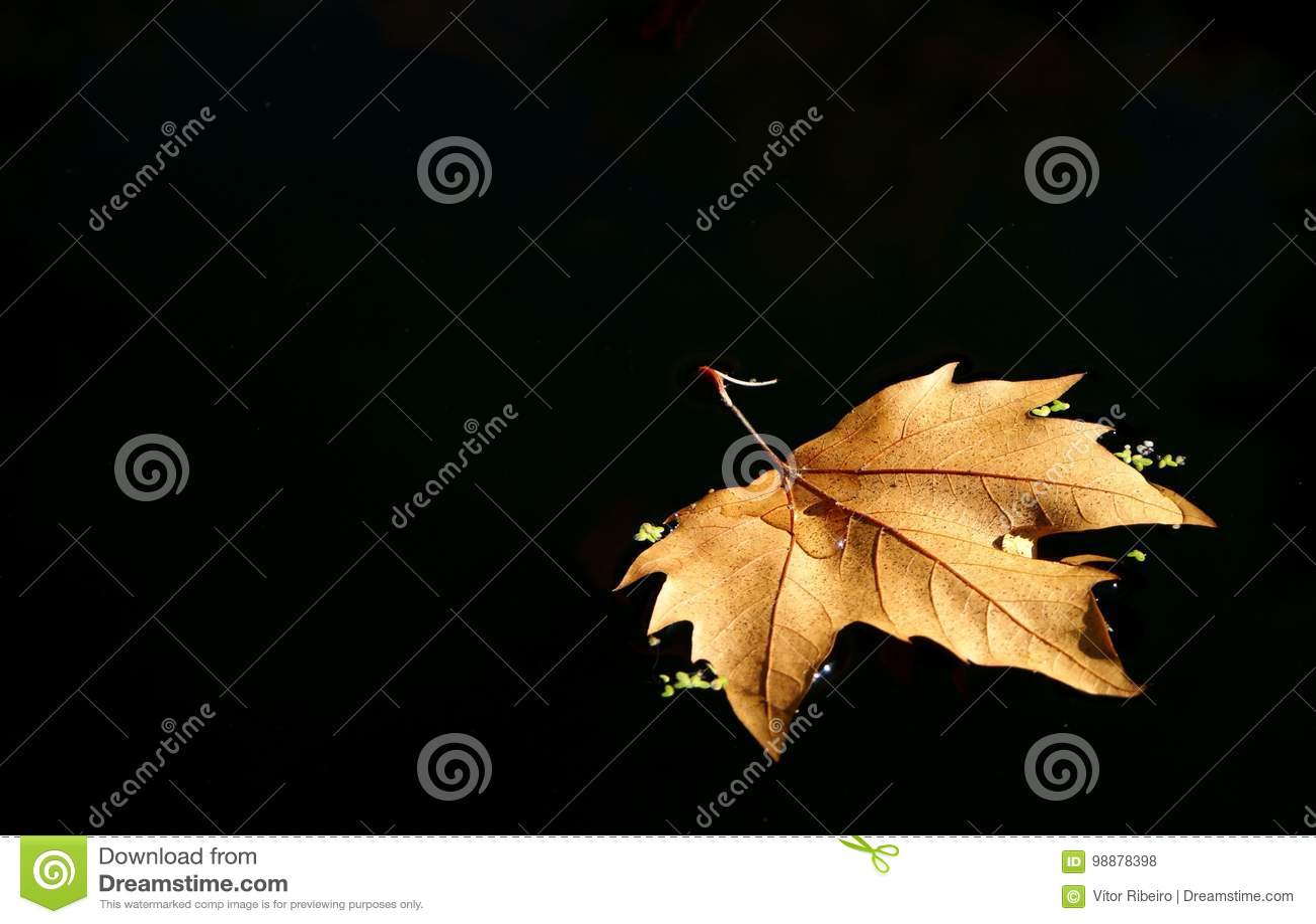 Leaf tree over the lake