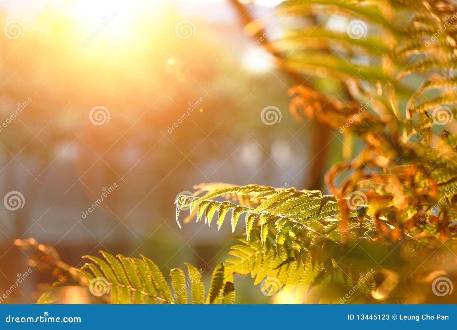 Leaf under sunstråle