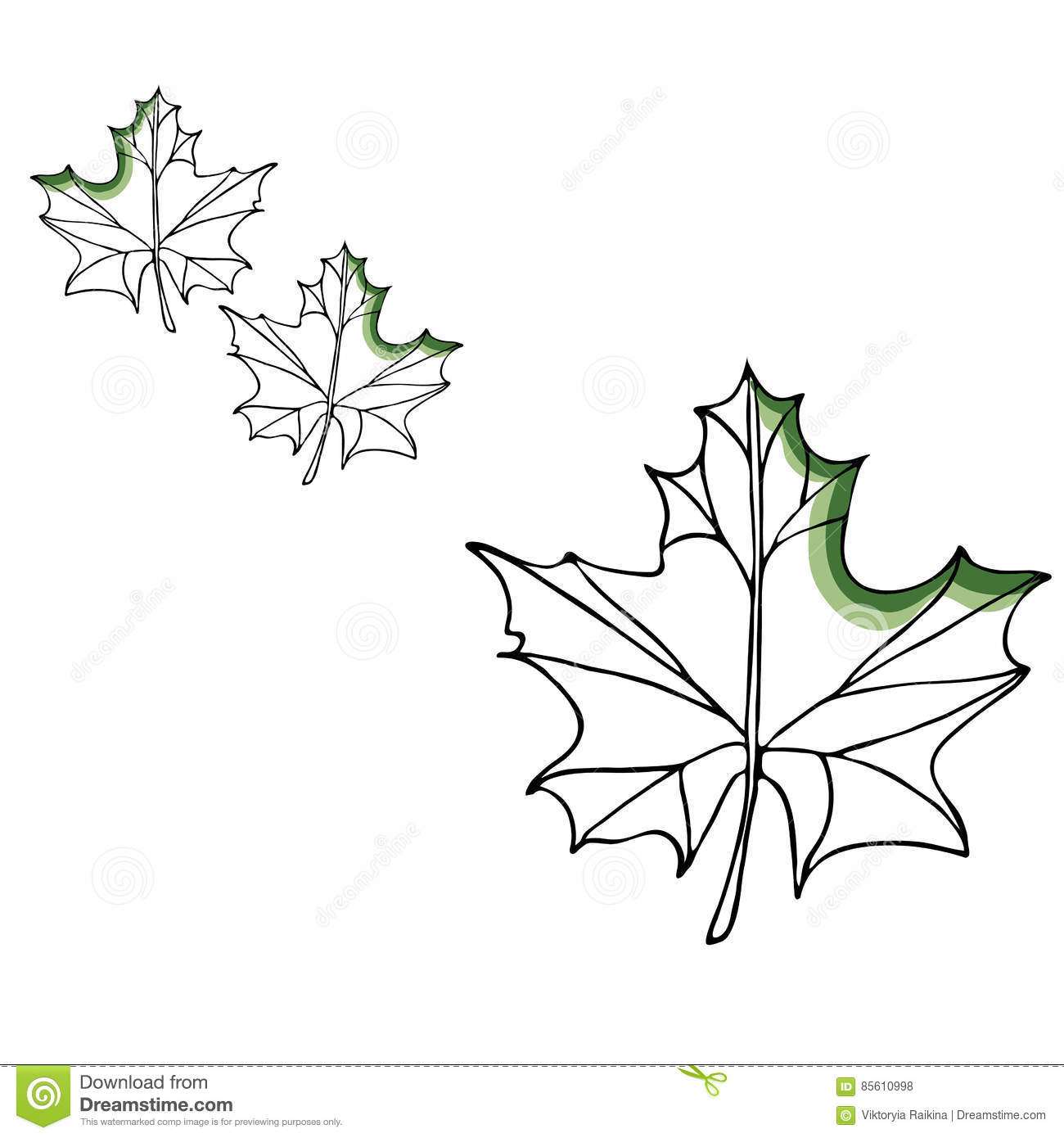 leaf vector drawing set  isolated tree leaves  herbal