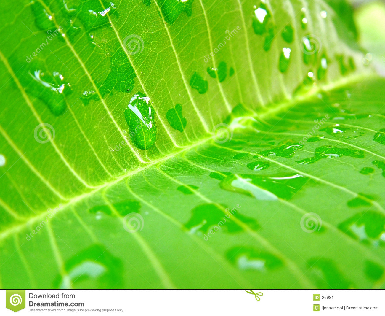 Leaf and waterdrops