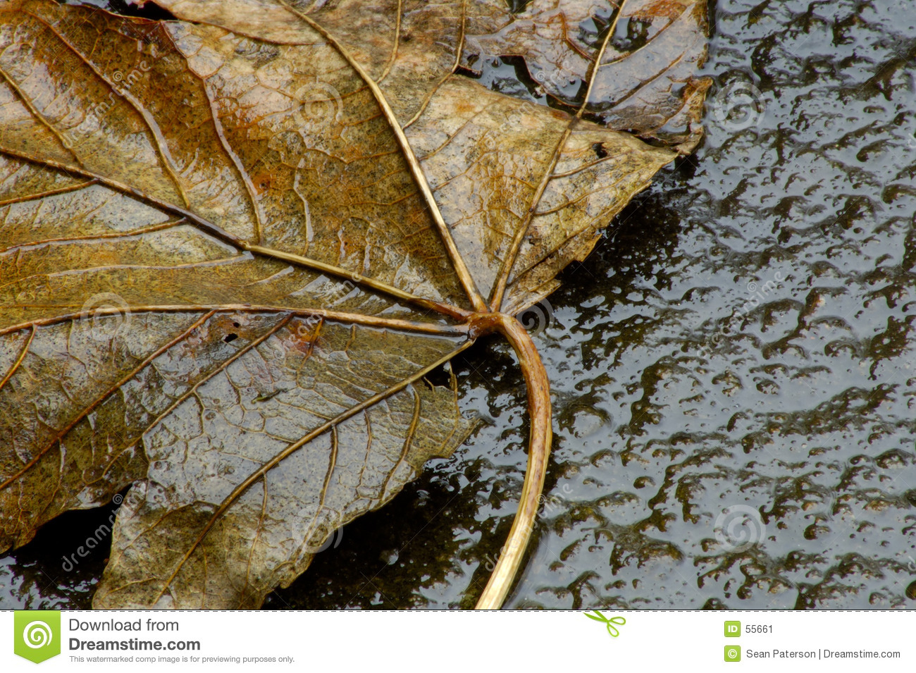 Leaf winter