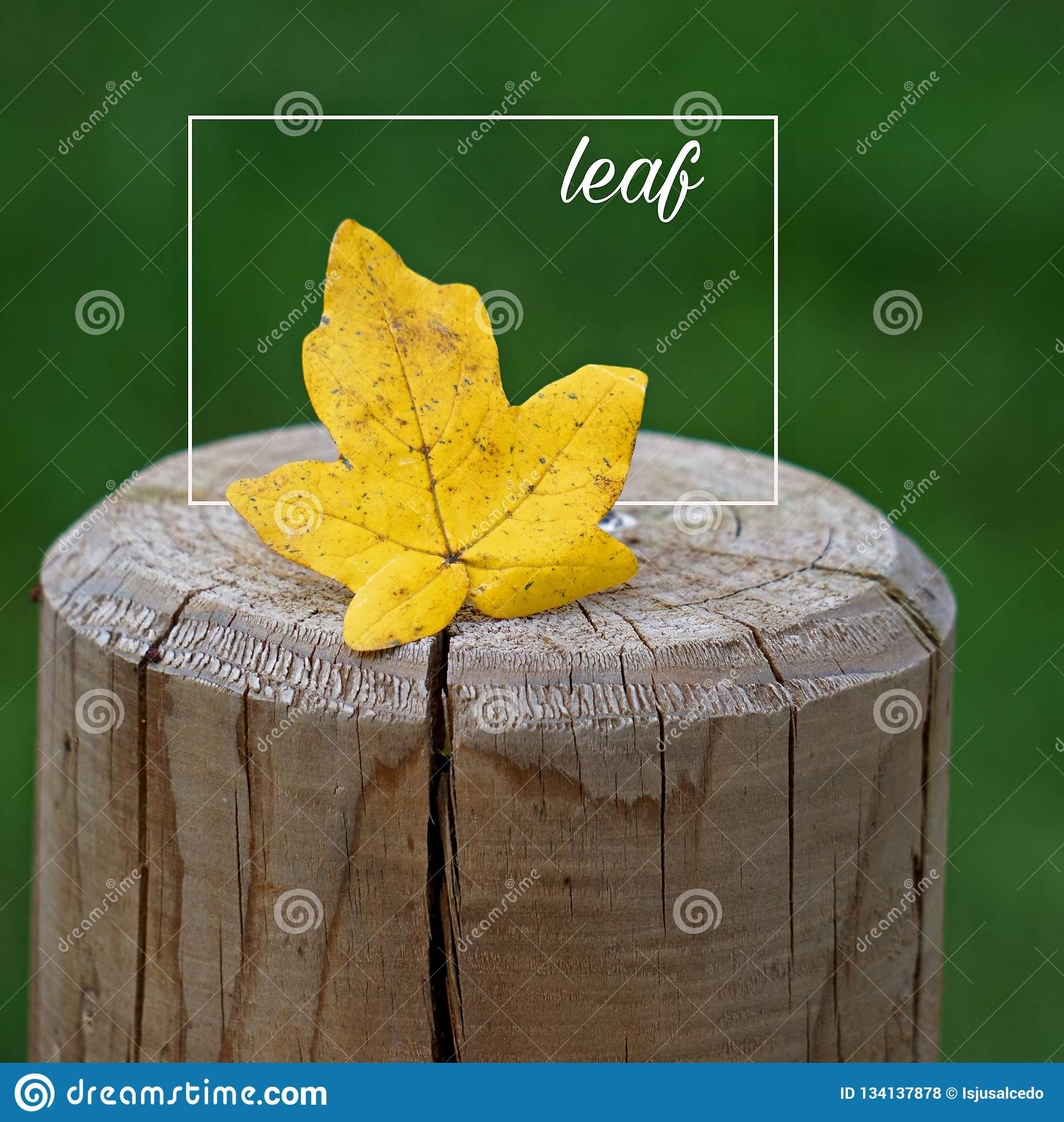 the leaf and words and quotes and letters stock illustration