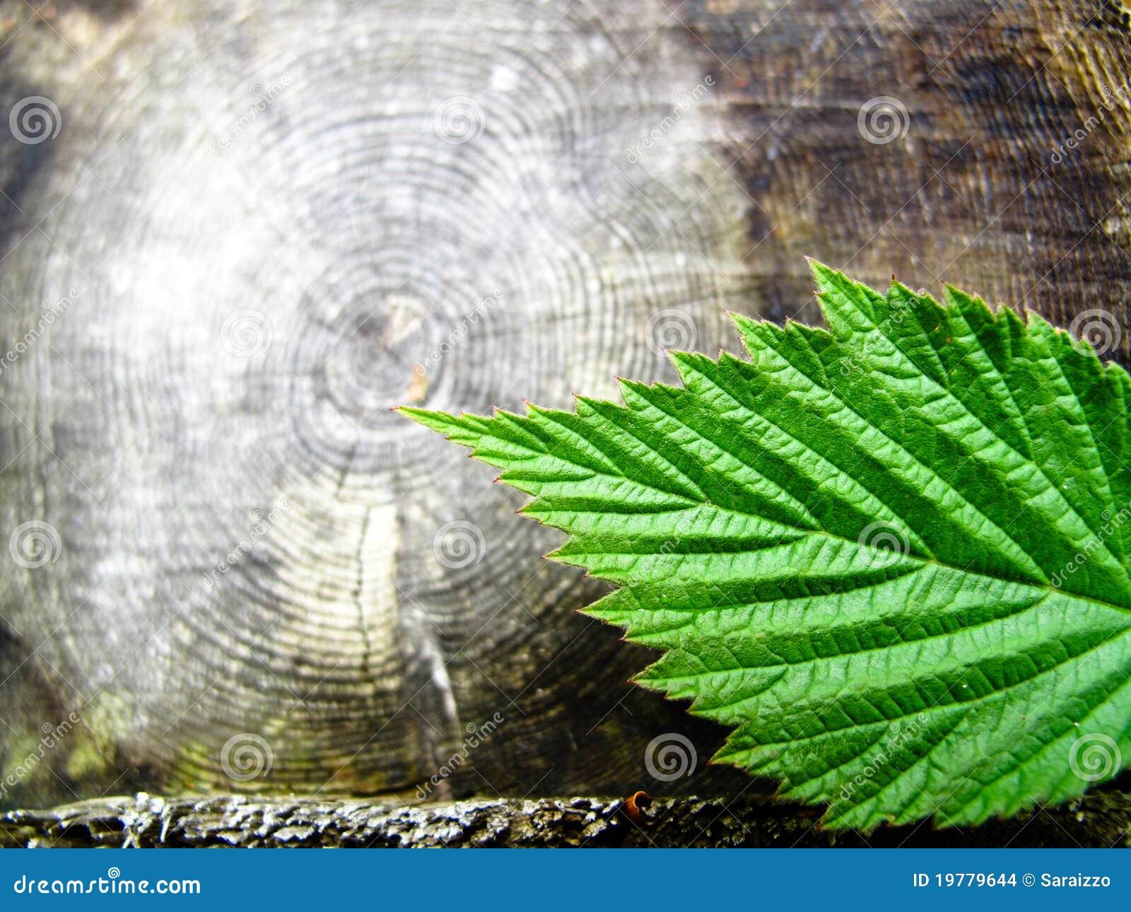 Leafcirklar