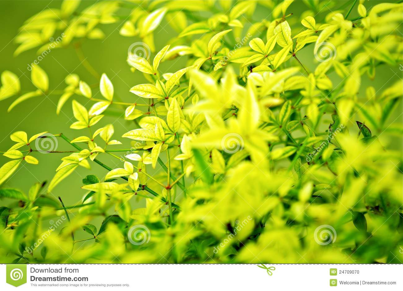 Leafes предпосылки зеленые