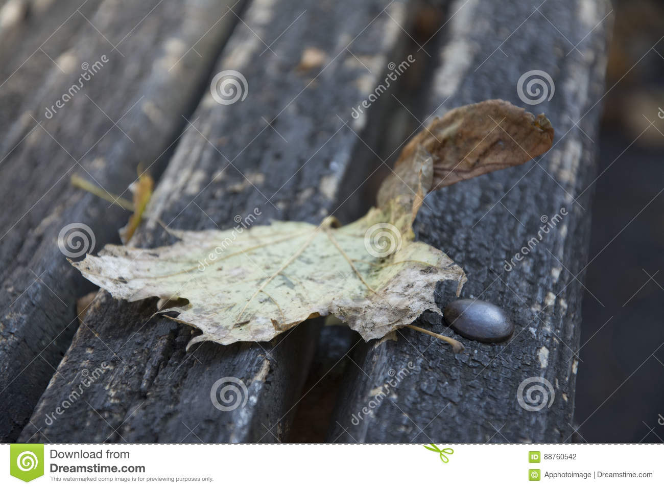 Leafes on a wood banch.