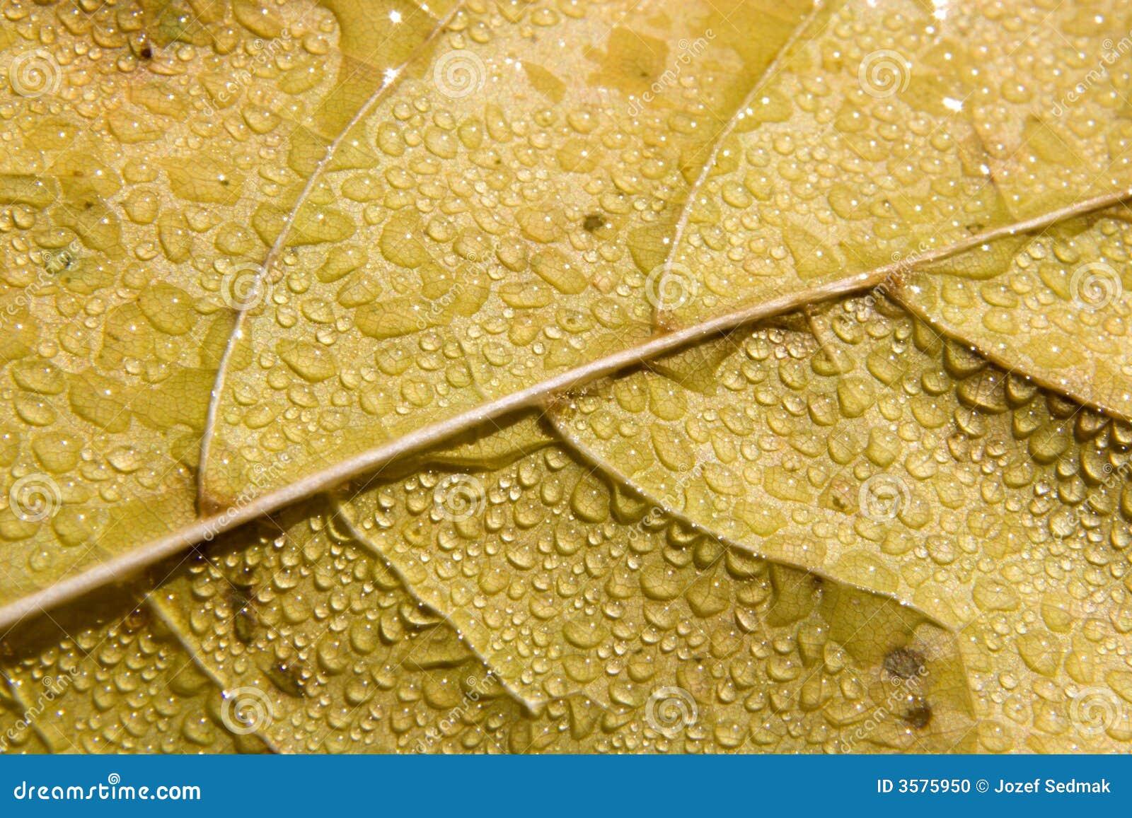 Leaffuktighet