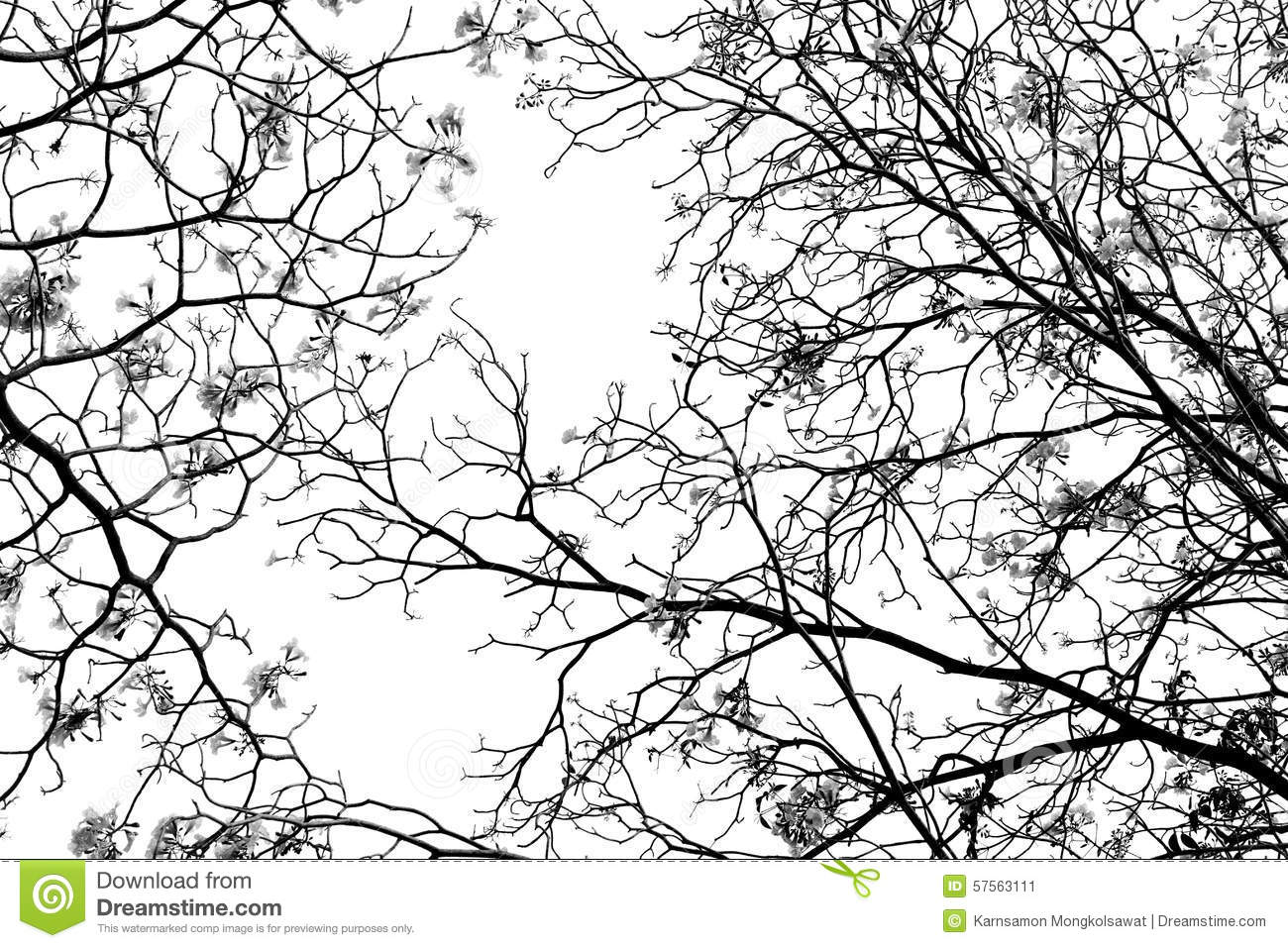 Leafless tree branch, black and white tone background
