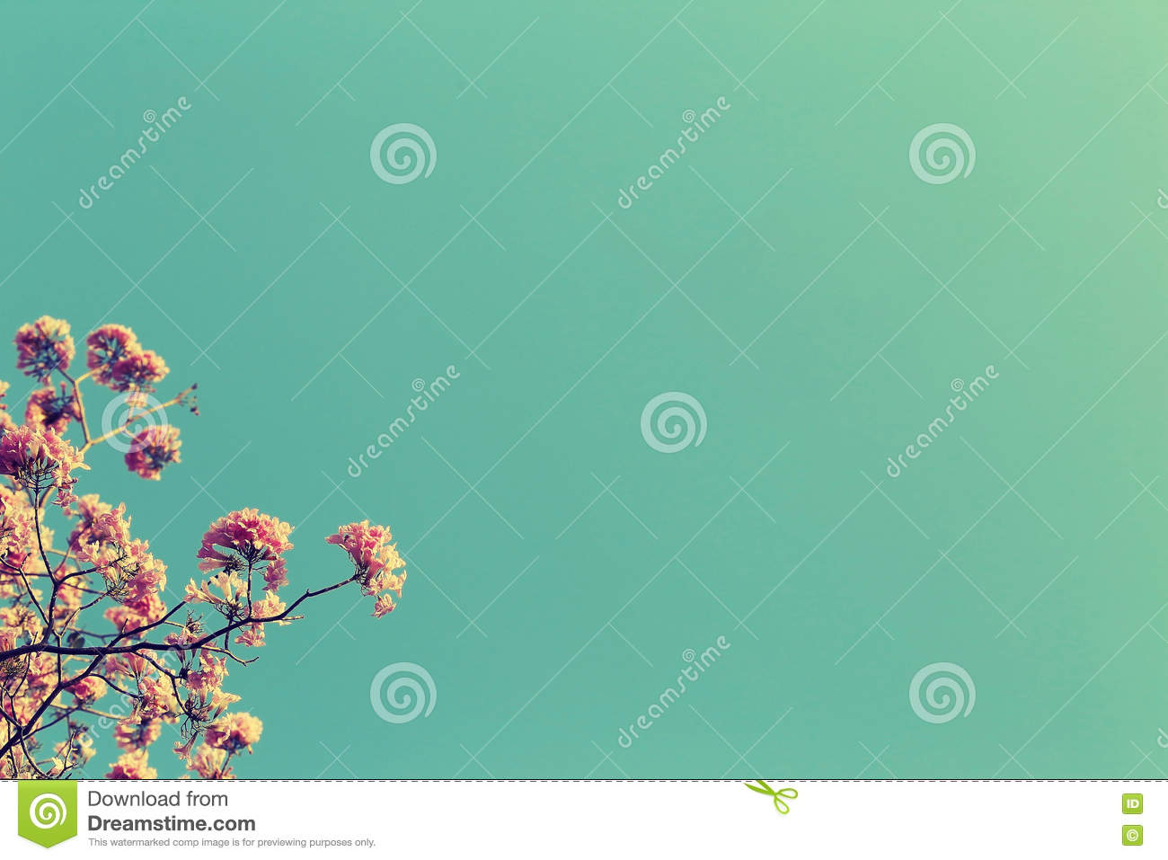 Leafless tree branch with pink flowers against blue sky background, vintage toned image