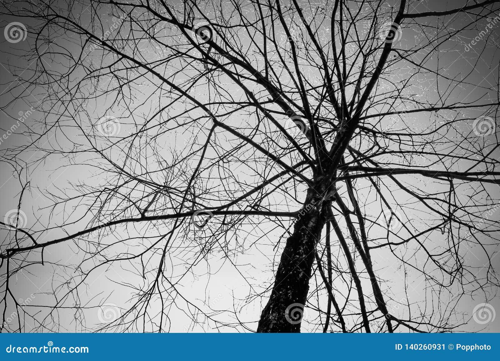 Leafless tree on sky