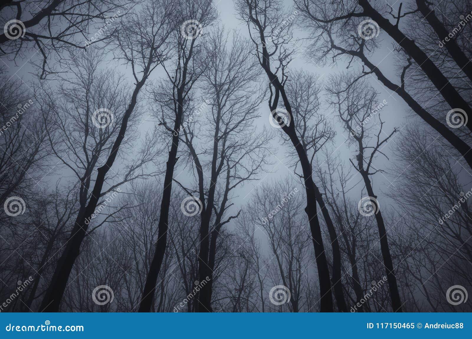 Leafless trees in dark haunted woods