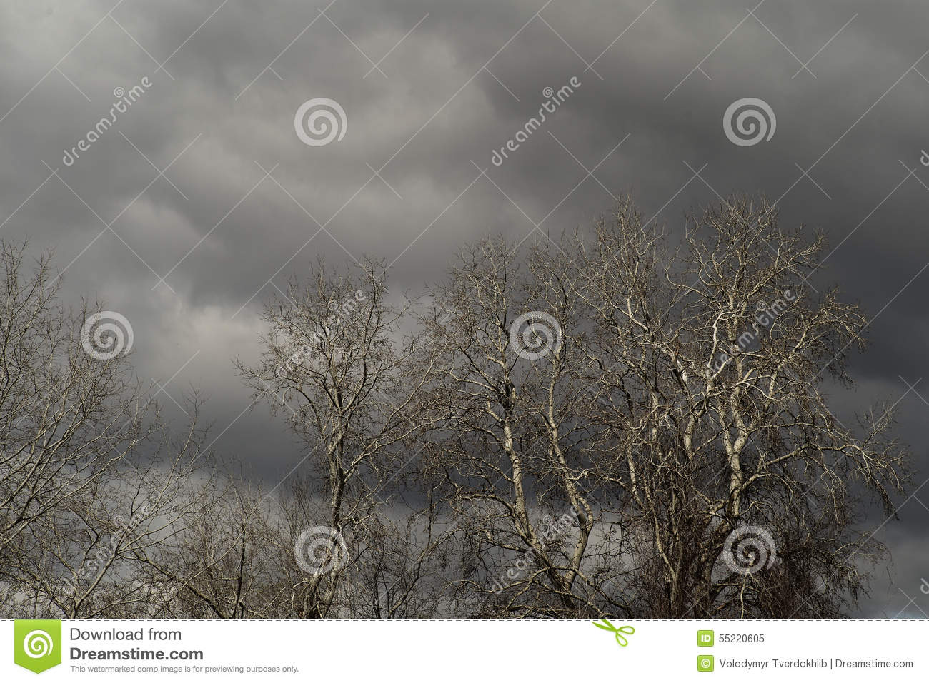 Leafless trees and grey clouds