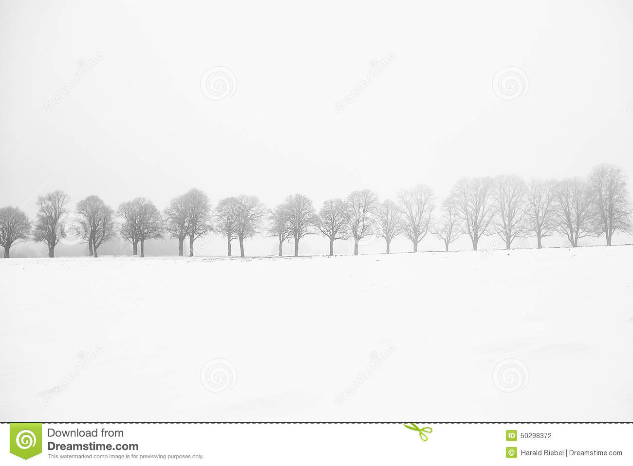 Leafless trees on a snow field