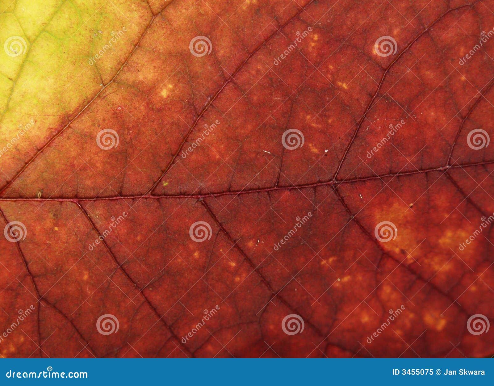 Leafmakro