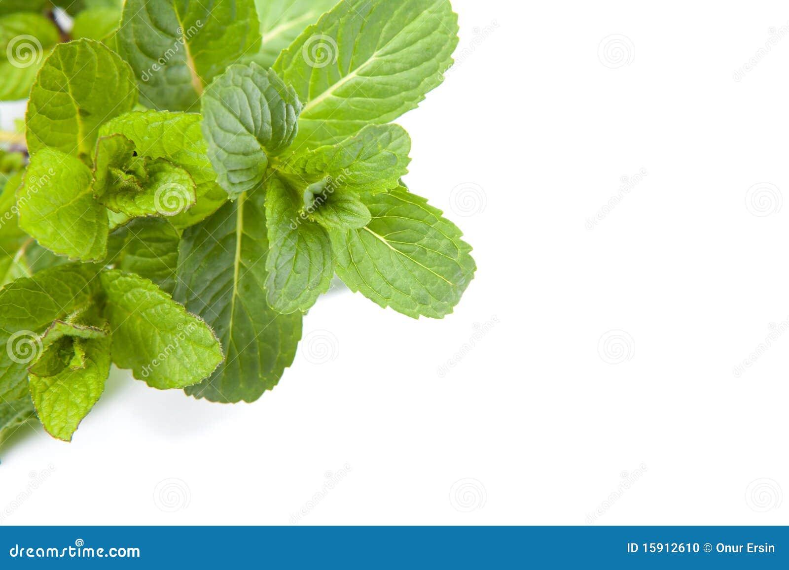 Leafmint