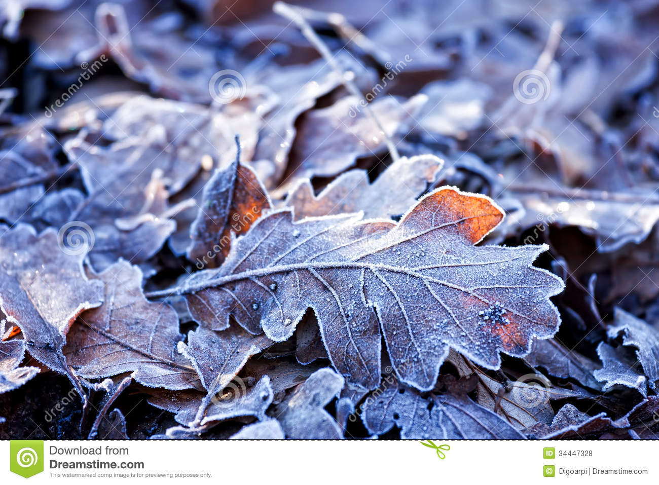 Leafs Stock Photo Image Of Colors Fall Woodland Wild