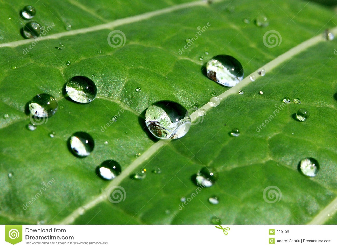 Leafwaterdrops