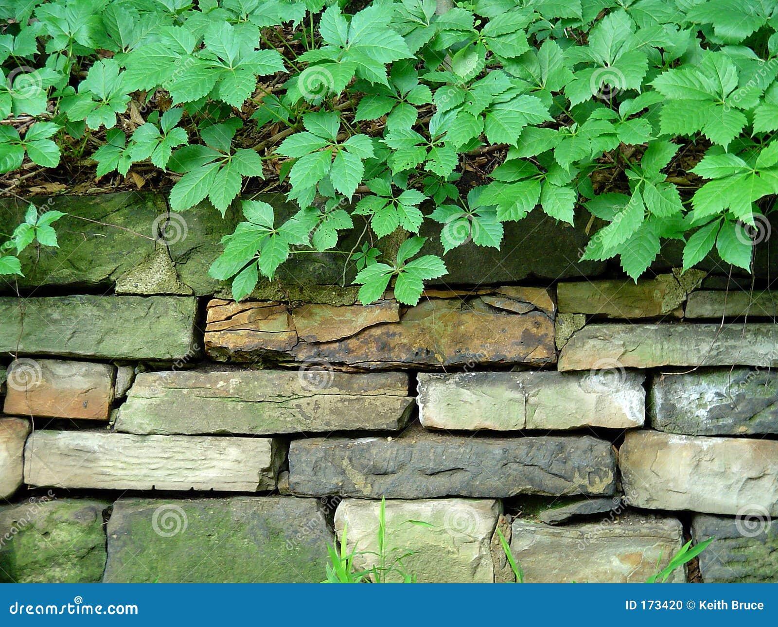 Leafy Stone Wall