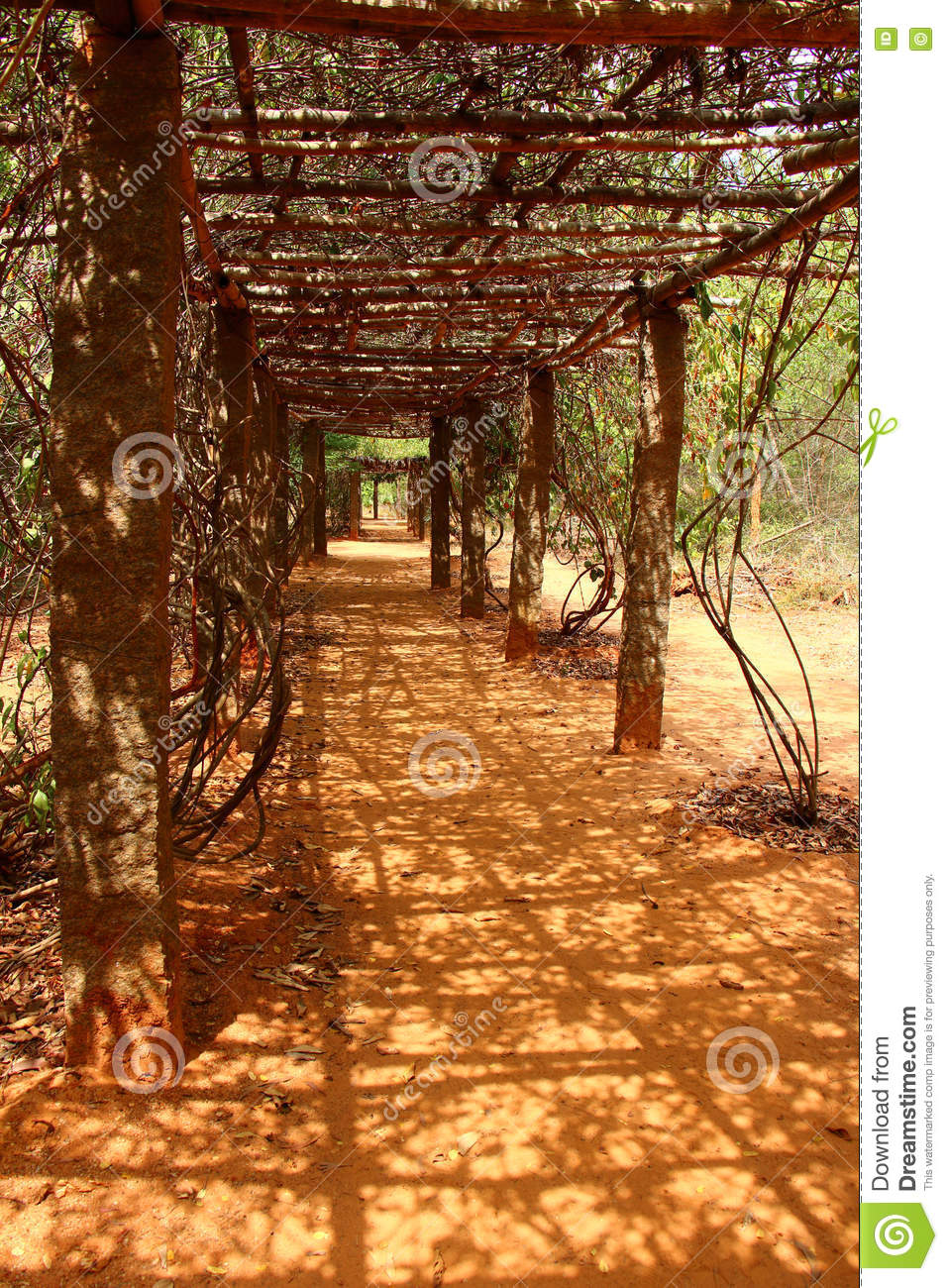 Leafy tunnel. Auroville stock image. Image of auroville - 75236925