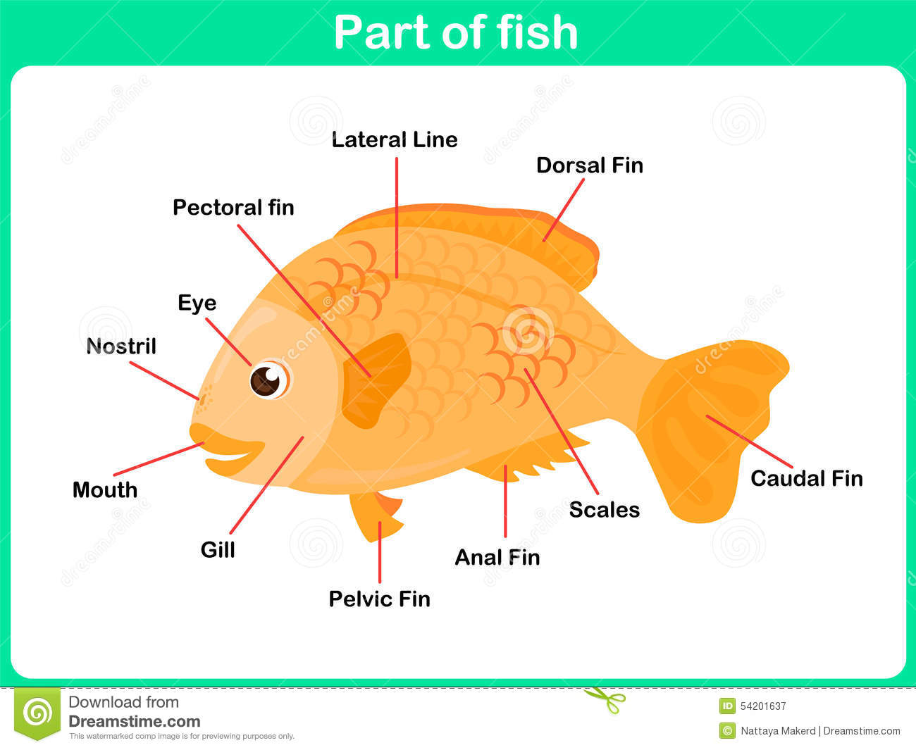 Leaning parts of fish for kids worksheet stock vector for Fish oil for toddlers speech delay