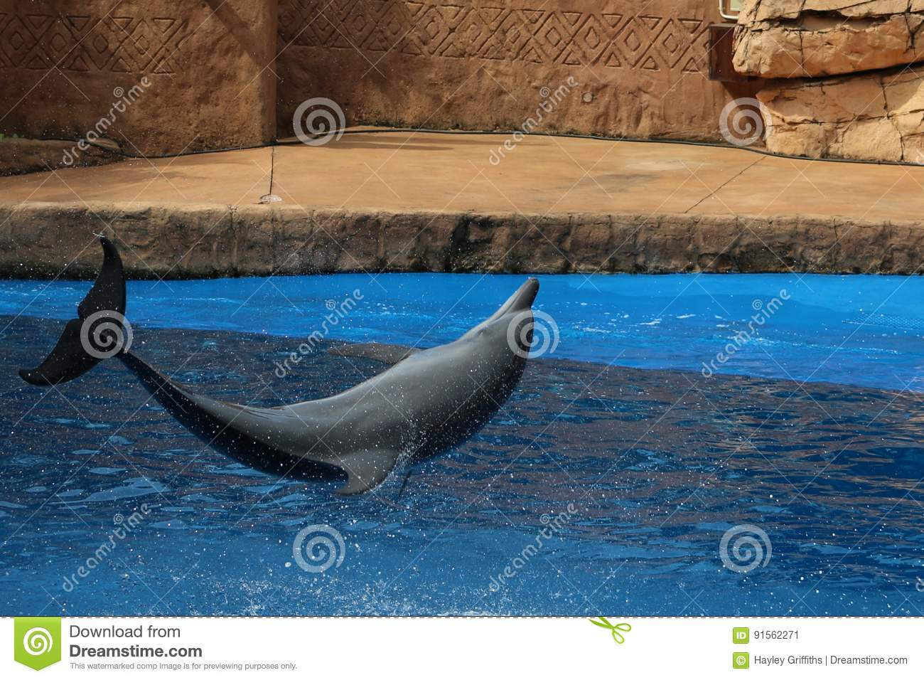 Dolphin jumping in a show