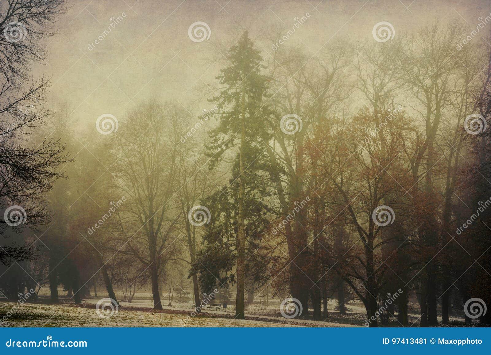 Leaveless-Bäume im Park nach dem ersten Schnee