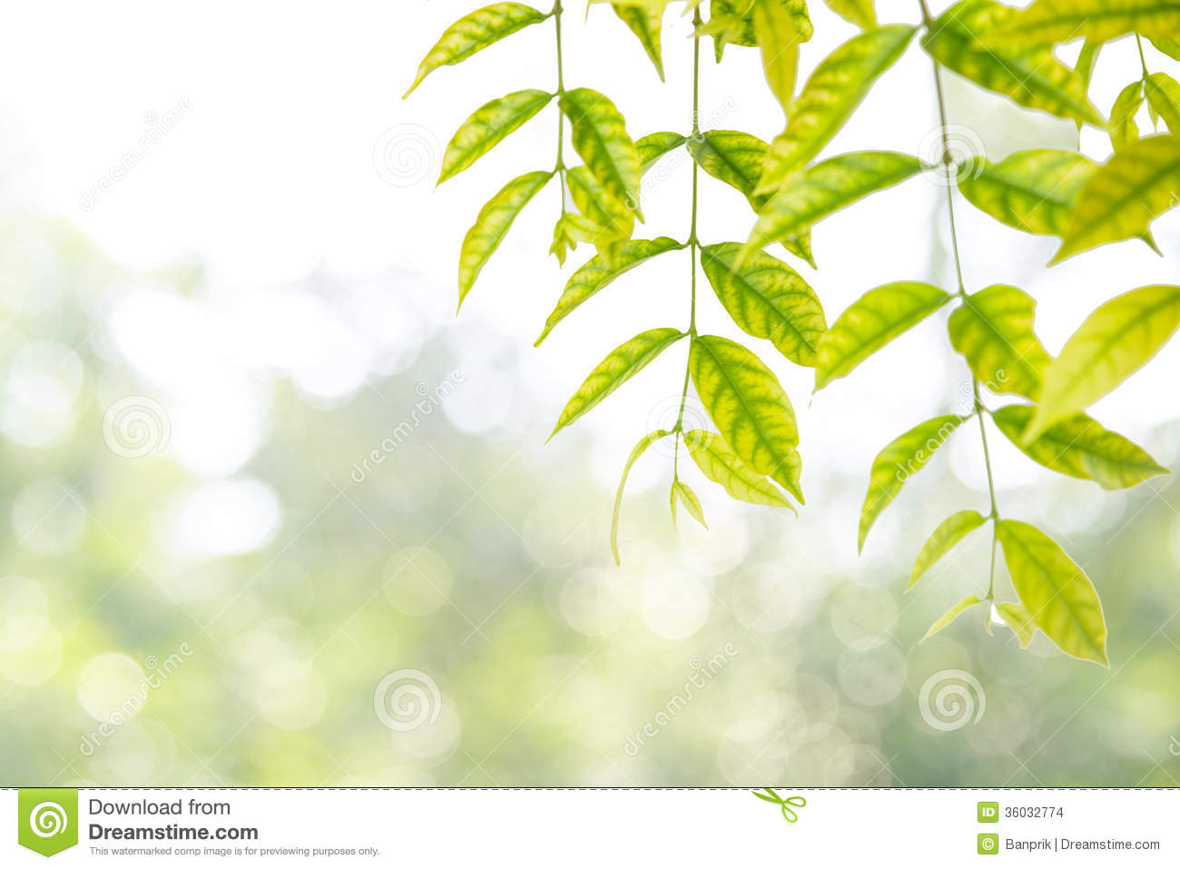 Leaves As Frame Against Nature Background Stock Images