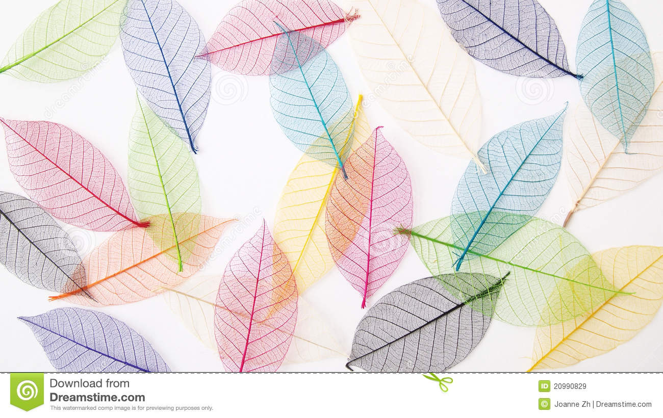 96090f7746f2 A still life photograph of some pastel colours dried pressed leaves forming  a casual light and airy back ground. Colorful and fresh nature back grounds  ...