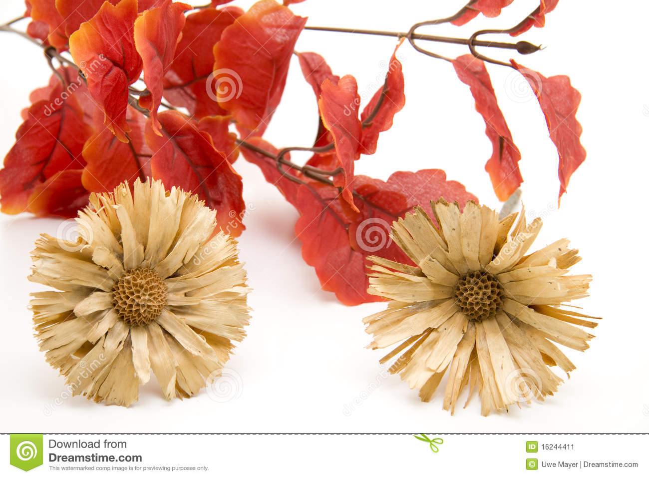 Leaves And Dry Flowers Stock Image Image