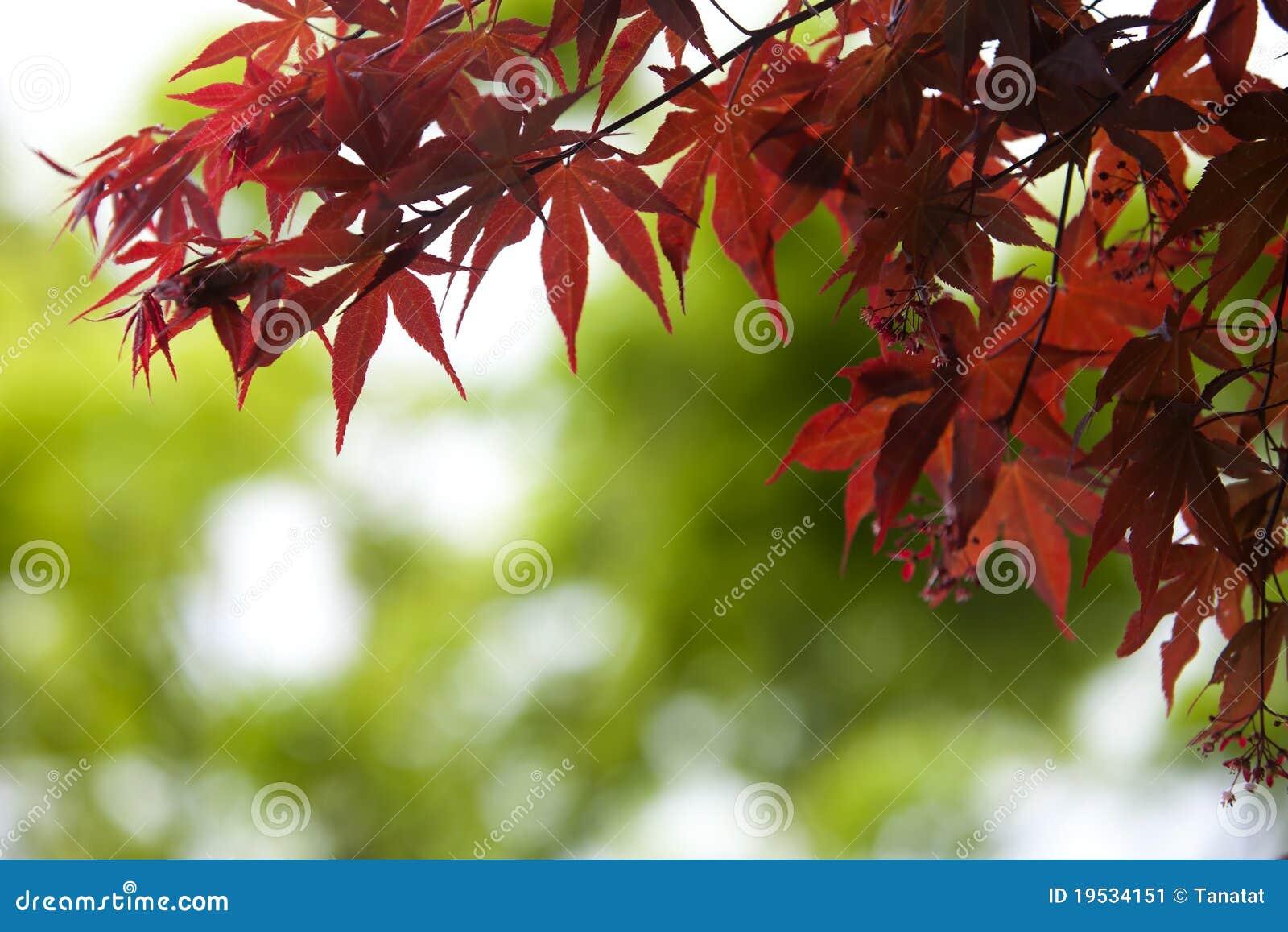Leaves för green för höstbokehfokus blir grund mycket