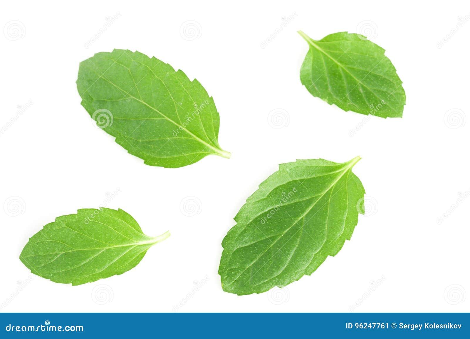 Leaves för ny mint som isoleras på vit bakgrund