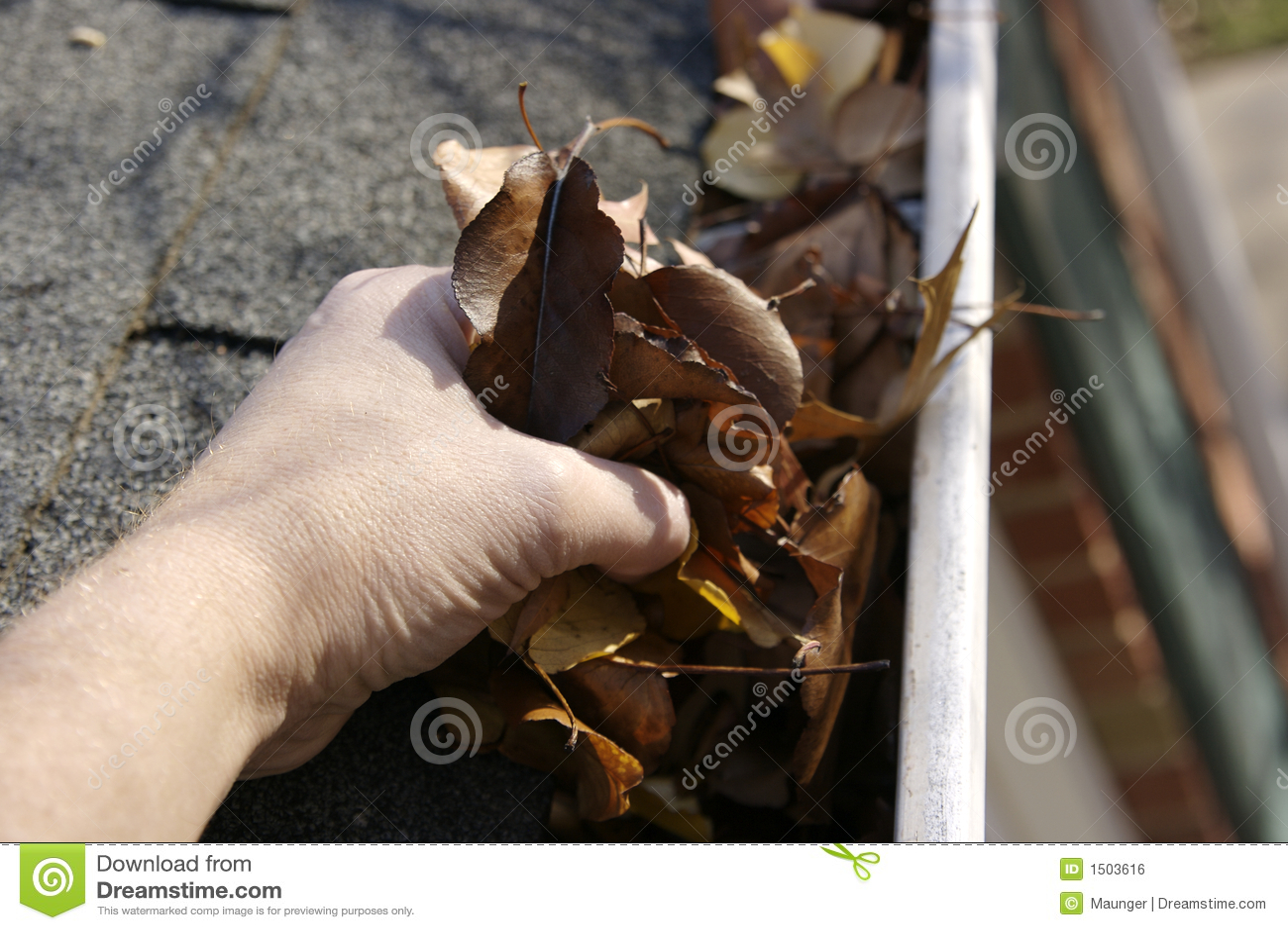 Leaves för rengöringsfallavloppsränna