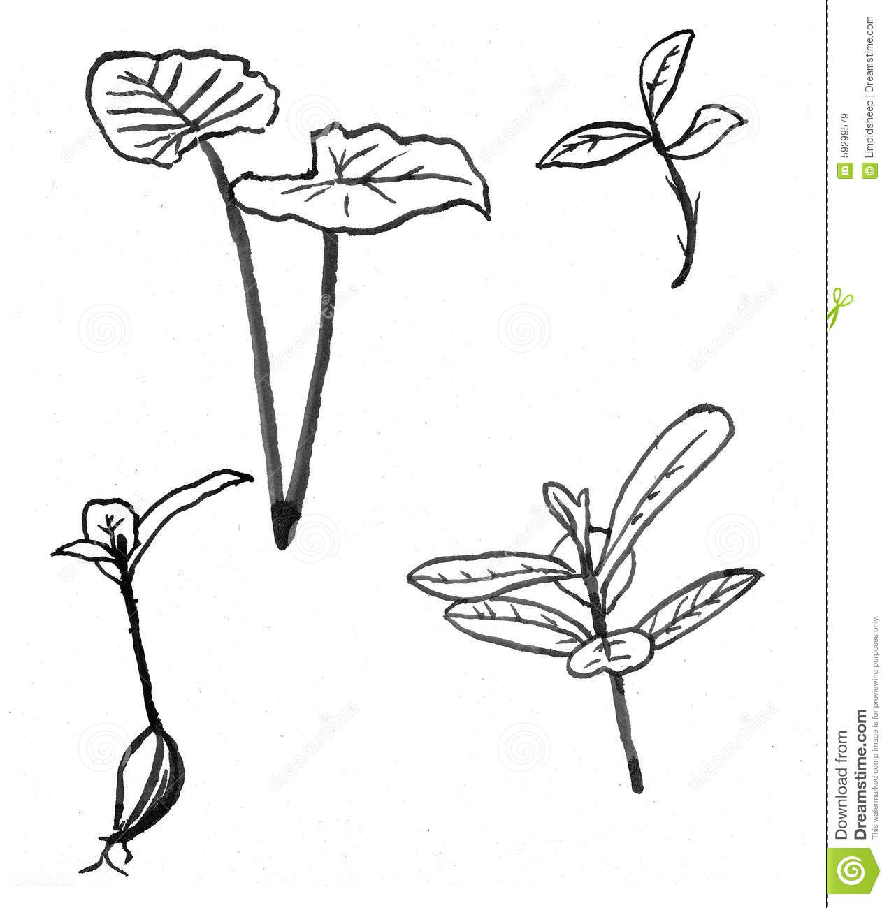 Flower Leaf Line Drawing : Leaves and flowers stock illustration image