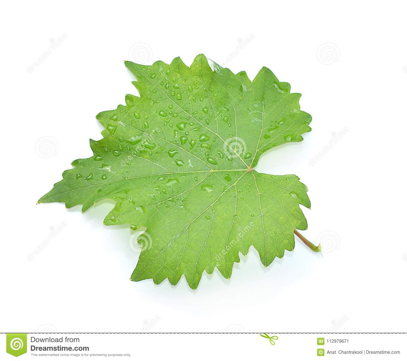 Leaves grape isolated on white background
