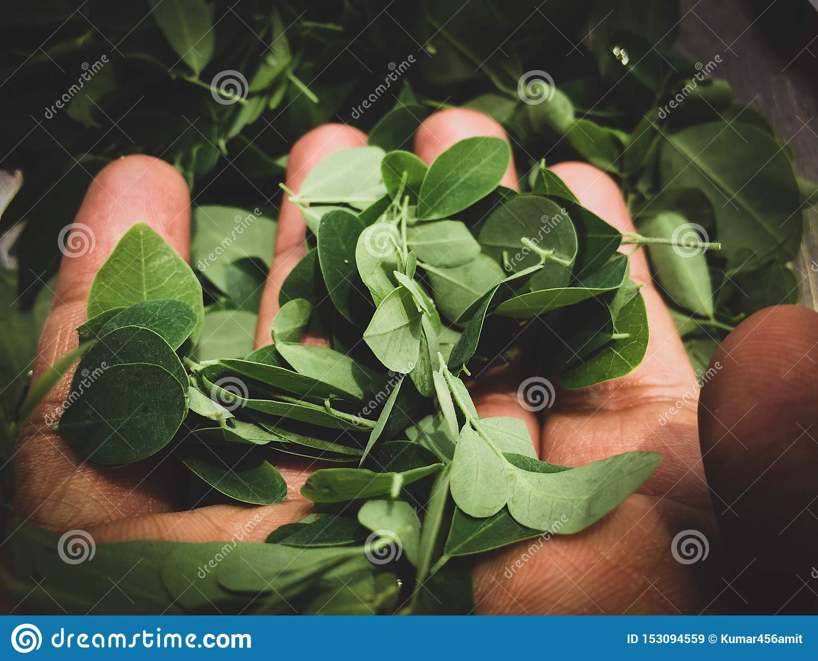 Leaves in the hand . Go green ! Save Environment , Save our Mother Earth