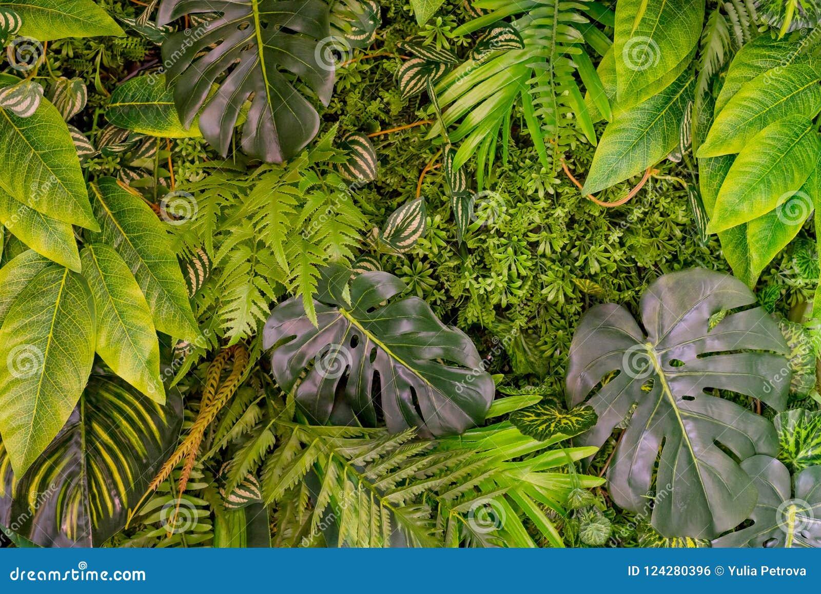 Leaves mönsan tropiskt Exotiska växter för grönt blad som är sömlösa på en mörk djungelbakgrund Konstnärlig fotocollage för
